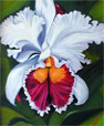 Orchid Painting in Oil White Cattleya