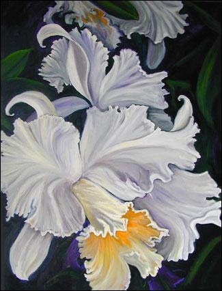 Χριστουγεννιάτικα Τερρο-φικ 2012 White_orchid_cat30x40